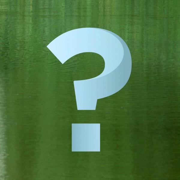 warum-wird-das-teichwasser-gruen
