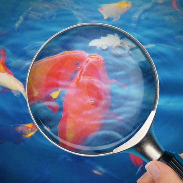 blauteich-ratgeber-krankheiten-teichfische