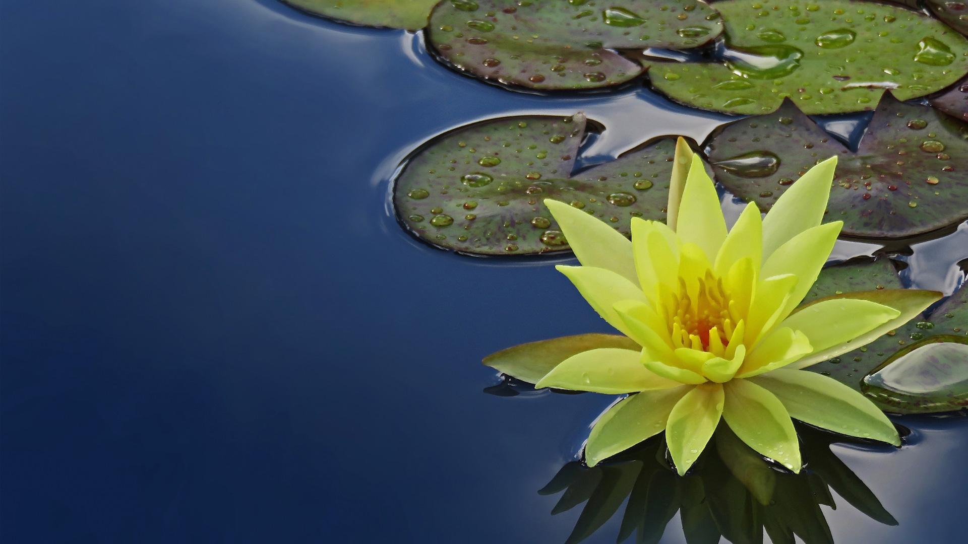 Grün- und Wasserpflanzen im Schwimmteich