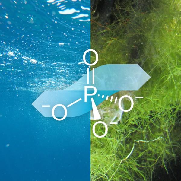 blauteich-ratgeber-algen-teich-durch-phosphat