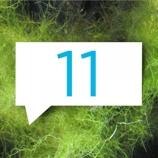 blauteich-ratgeber-11-gruende-fuer-fadealgen