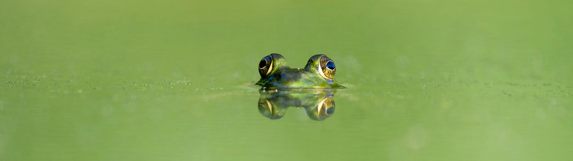 Grünes Wasser im Schwimmteich
